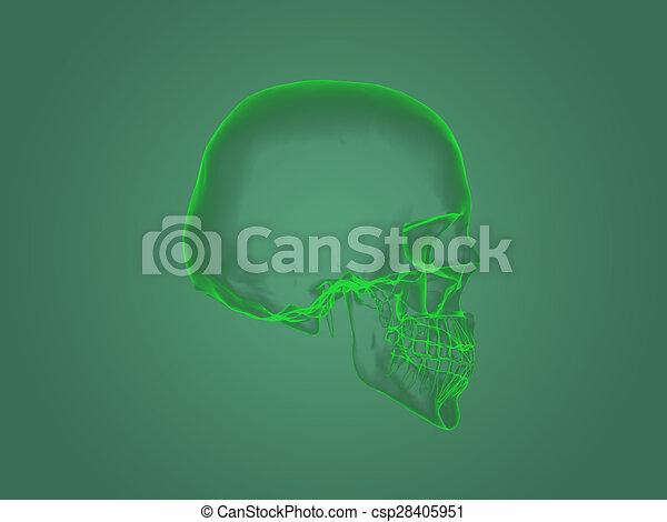 koerperbau, haupt röntgenstrahl - csp28405951