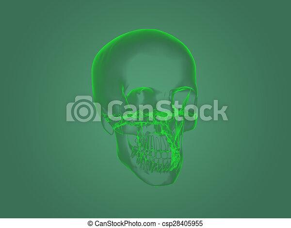 koerperbau, haupt röntgenstrahl - csp28405955