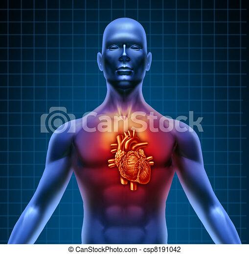 Menschlicher Torso mit roter Herz Anatomie - csp8191042