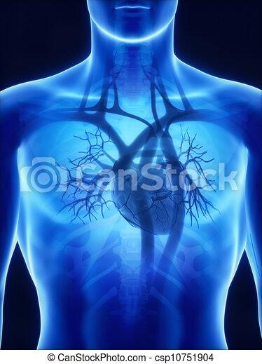 Röntgen-Herz-Anatomy - csp10751904