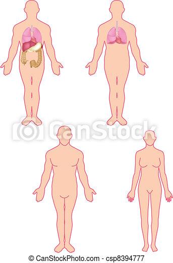 koerperbau, menschliche  - csp8394777