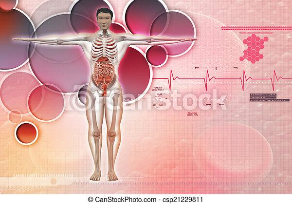 Menschliche Anatomie - csp21229811