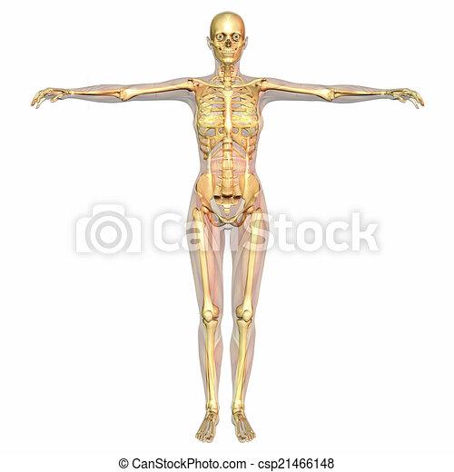 Menschliche Anatomie - csp21466148