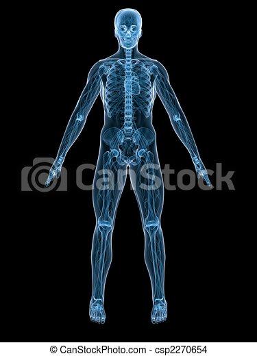 Menschliche Anatomie - csp2270654
