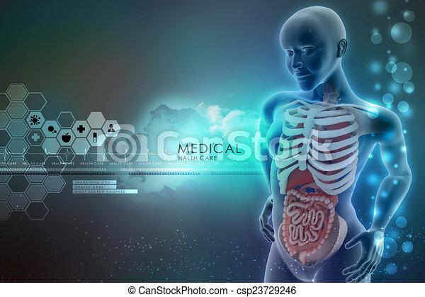 Menschliche Anatomie - csp23729246