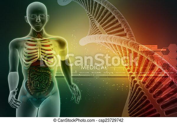 koerperbau, menschliche  - csp23729742