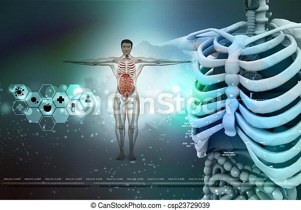 Menschliche Anatomie - csp23729039