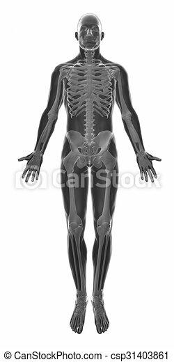 Muskelanatomie isoliert - csp31403861