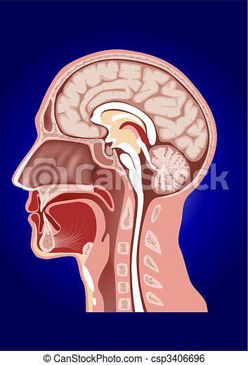 Kopf-Anatomy - csp3406696