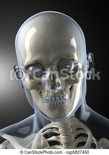 kopf, menschliche , front, mann, röntgenaufnahme, ansicht - csp5827450