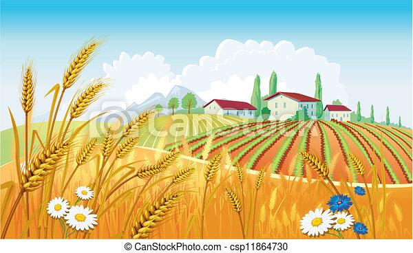 Landschaft mit Feldern. - csp11864730