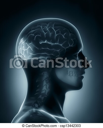 Occipitallappen, medizinische Röntgenaufnahme - csp13442303