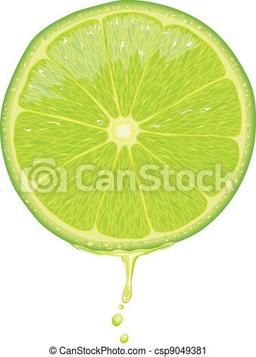 Lime Scheibe - Vektor - csp9049381