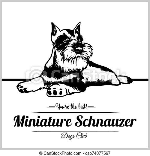 logo, vektor, hund, schnauzer, schablone, miniatur, -, t-shirt, abzeichen, abbildung - csp74077567