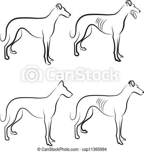 logo, vektor, windhund, hunden - csp11365994