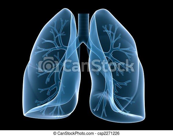 Lung und Bronchi - csp2271226