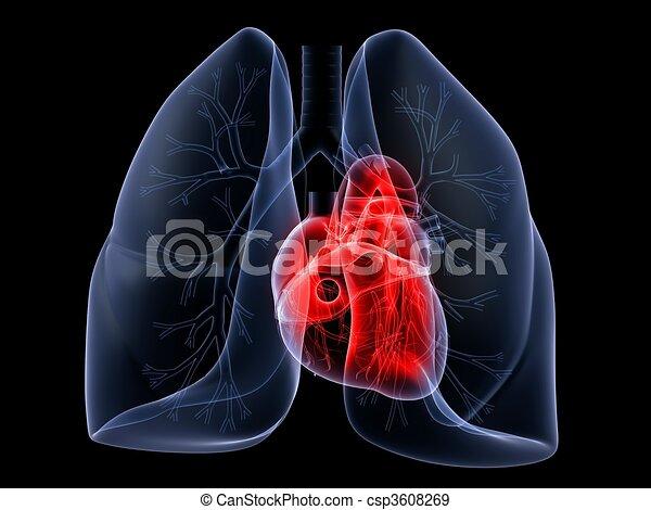 Lunge und Herz - csp3608269