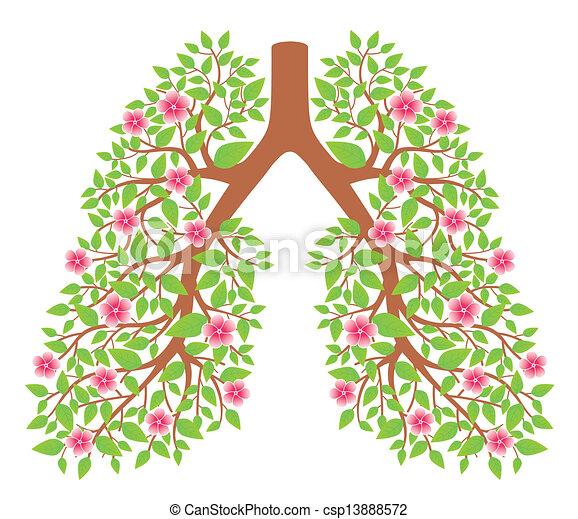 Lungen gesund - csp13888572