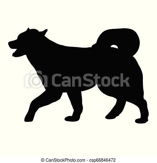 malamute, hund, alaskisch - csp66846472