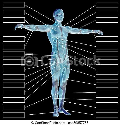 mann, koerperbau, muskeln, schwarz, textbox, oder, freigestellt, menschliche , 3d, mann, hintergrund - csp89857766
