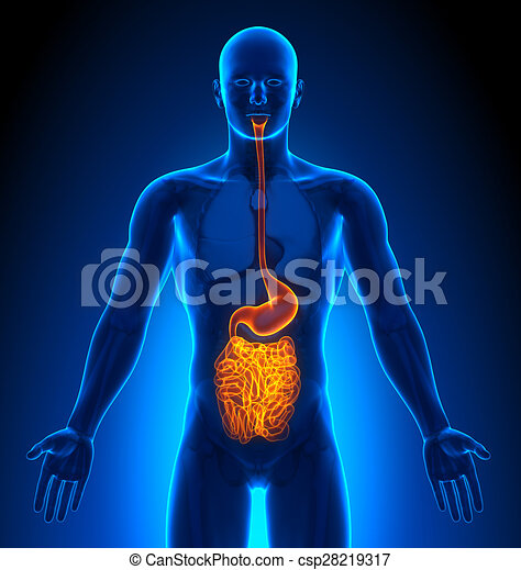 medizin, eingeweide, -, imaging, mann, organe - csp28219317