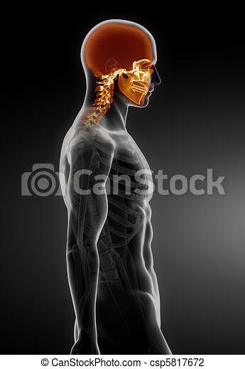 medizin, menschlicher schädel, überfliegen - csp5817672