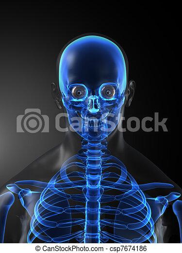 medizin, skelett, menschliche , überfliegen - csp7674186