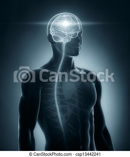 medizinische röntgenaufnahme, gehirn, rückenmark, überfliegen - csp13442241