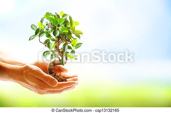 Menschenhände halten grüne Pflanzen über dem Natural - csp13132165