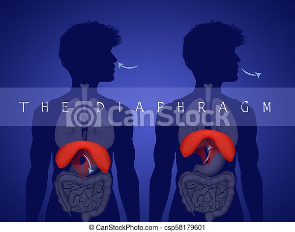 Menschliche Anatomie. - csp58179601