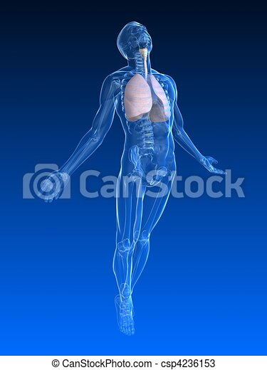 menschliche , aufstand, koerper - csp4236153