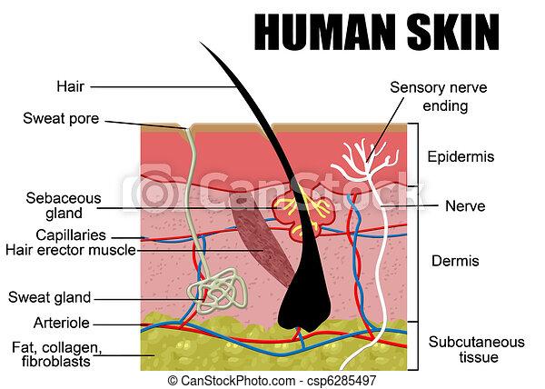 menschliche haut - csp6285497