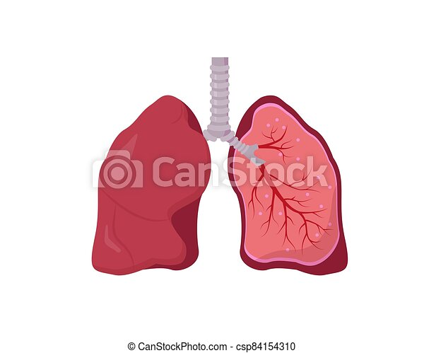 menschliche , hintergrund., weißes, koerperbau, diagramm, lunge - csp84154310