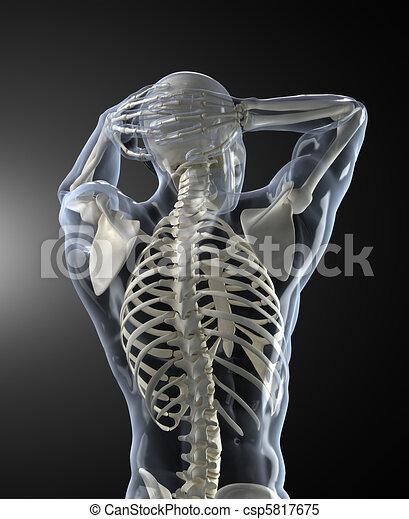 Menschliche Körper-Medizin-Scan-Rücksicht. - csp5817675