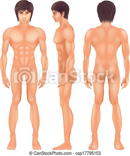 Menschlicher Körper. - csp17795153