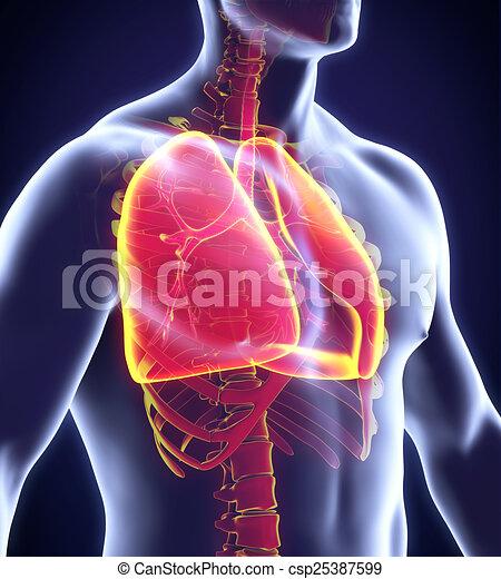 Menschliches Atemsystem - csp25387599