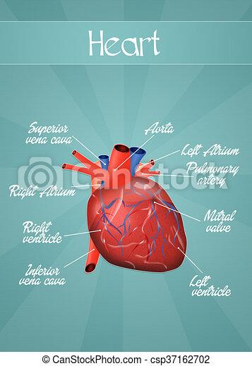 Menschliches Herz. - csp37162702
