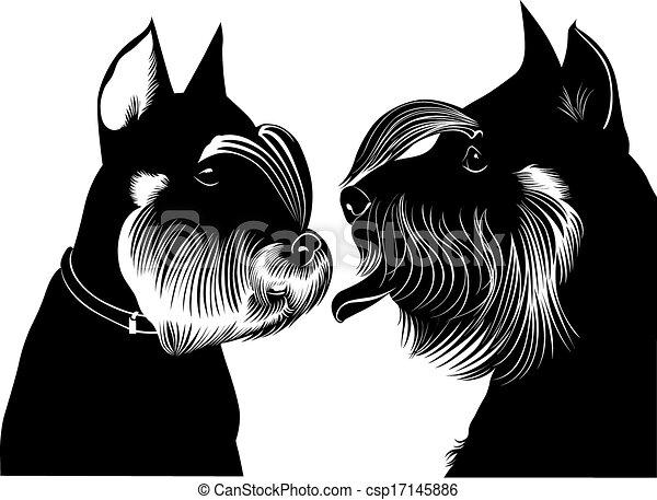 miniatur, hund, schnauzer - csp17145886