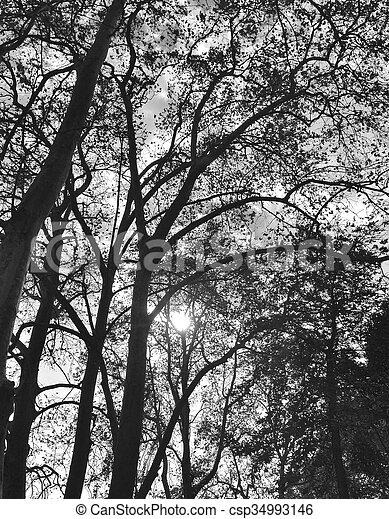 Natur. - csp34993146