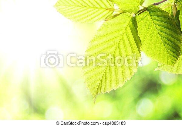Natur - csp4805183