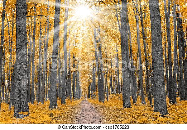 Natur. Wald im Herbst - csp1765223