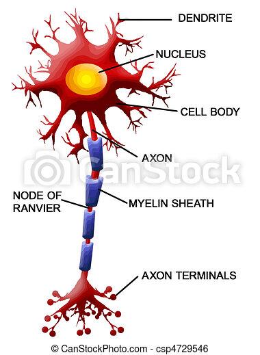 Neuronzelle - csp4729546