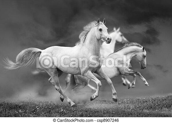 Pferde rennen - csp8907246