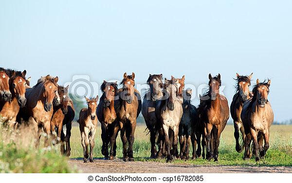 Wildpferde auf dem Feld - csp16782085