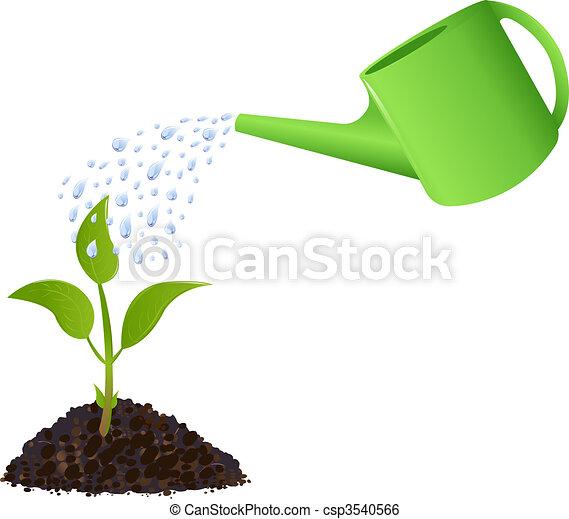 pflanze, bewässerung, grün, junger, buechse - csp3540566