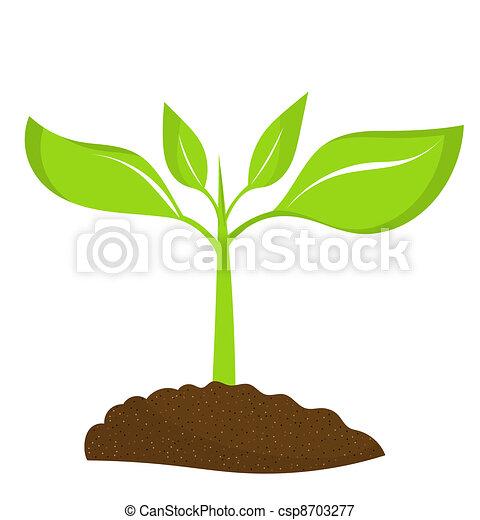 pflanze, junger - csp8703277