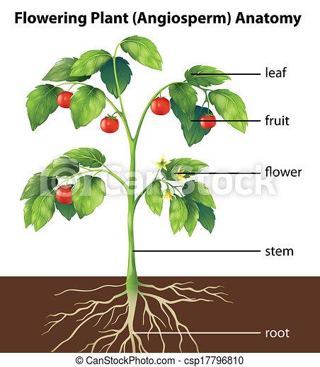 Teile einer Pflanze - csp17796810