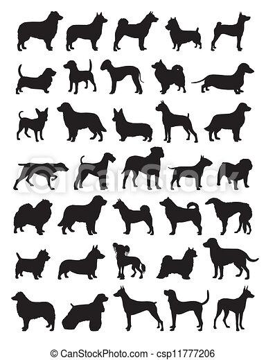populär, silhouetten, hund, rassen - csp11777206