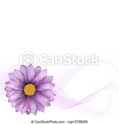 Purple Gerber mit unscharf - csp10798269