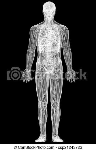 röntgenaufnahme, koerper, schwarz, freigestellt, ansicht, voll, menschliche  - csp21243723